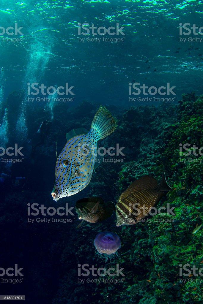 Reef fish & Divers stock photo