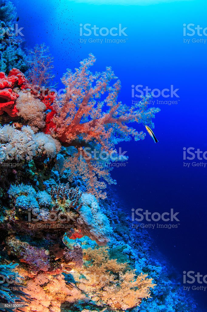 reef in the Red Sea stock photo