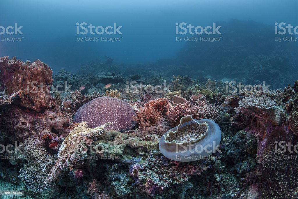 reef scape royalty-free stock photo