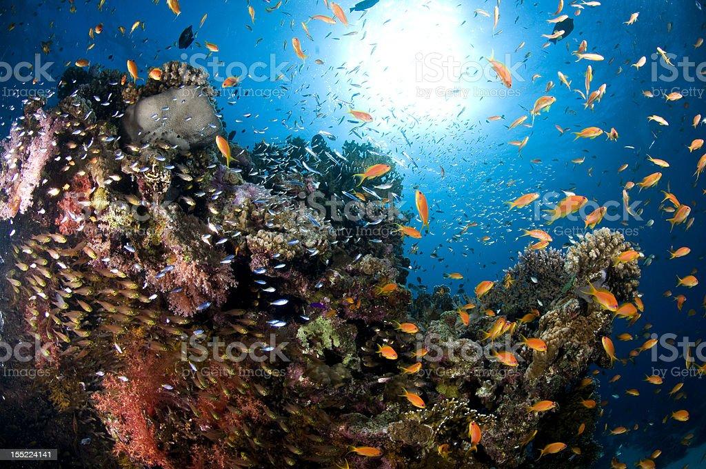Reef scene in tropical sea stock photo
