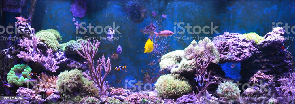 Reef tank, marine aquarium filled with water for keeping live underwater animals. Day view. stock photo