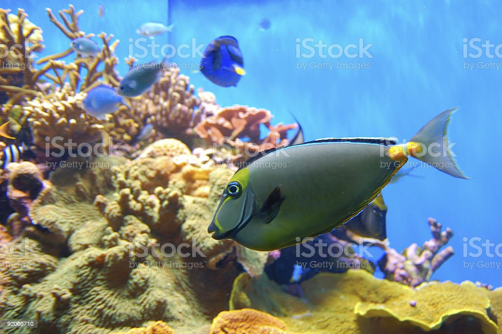 Reef Tank royalty-free stock photo