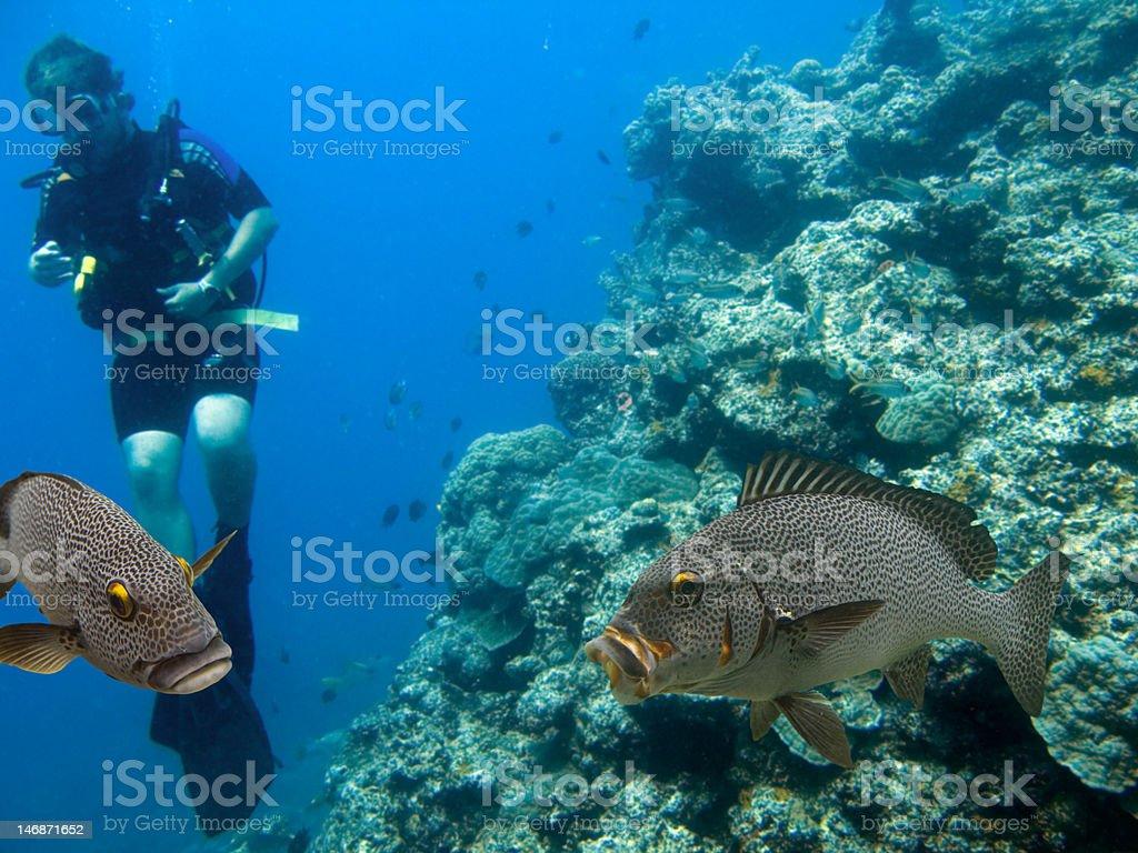 Reefcods stock photo