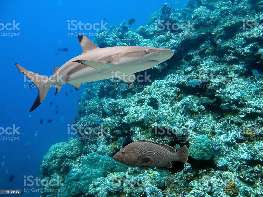 Reeflife stock photo