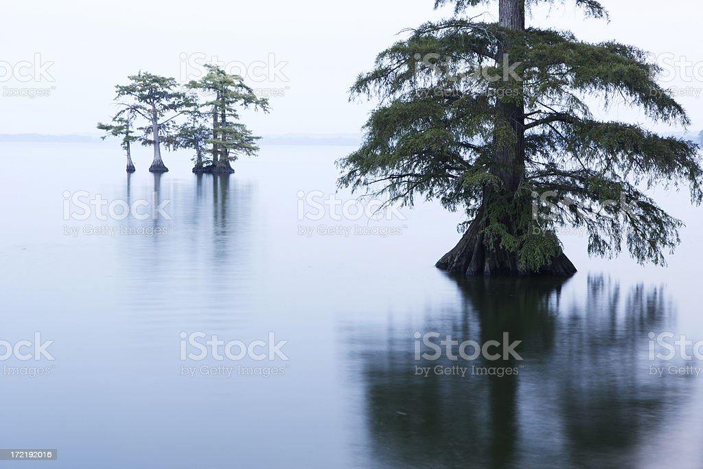 Reelfoot Lake royalty-free stock photo