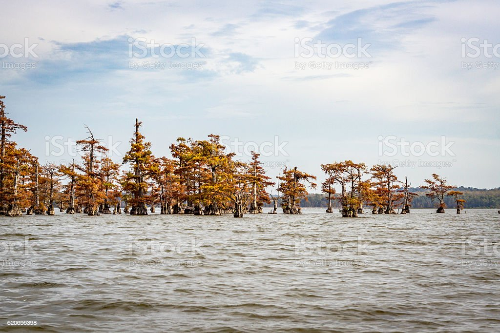 Reelfoot Lake with Cypress stock photo