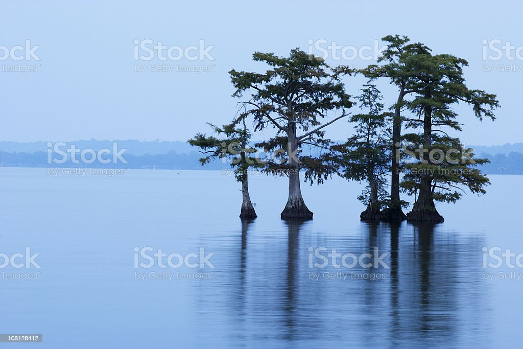 Reelfoot Lake with Trees in Water royalty-free stock photo