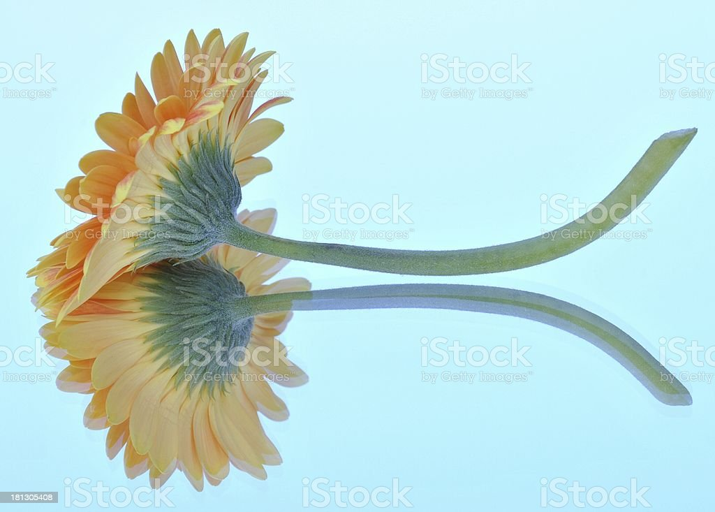 Reflected Golden Flower royalty-free stock photo