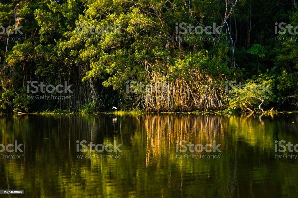 Reflected jungle stock photo