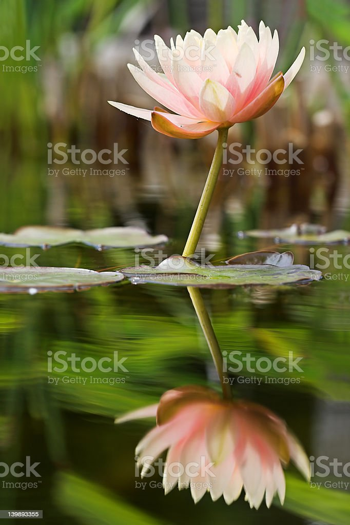 Reflected serenity royalty-free stock photo