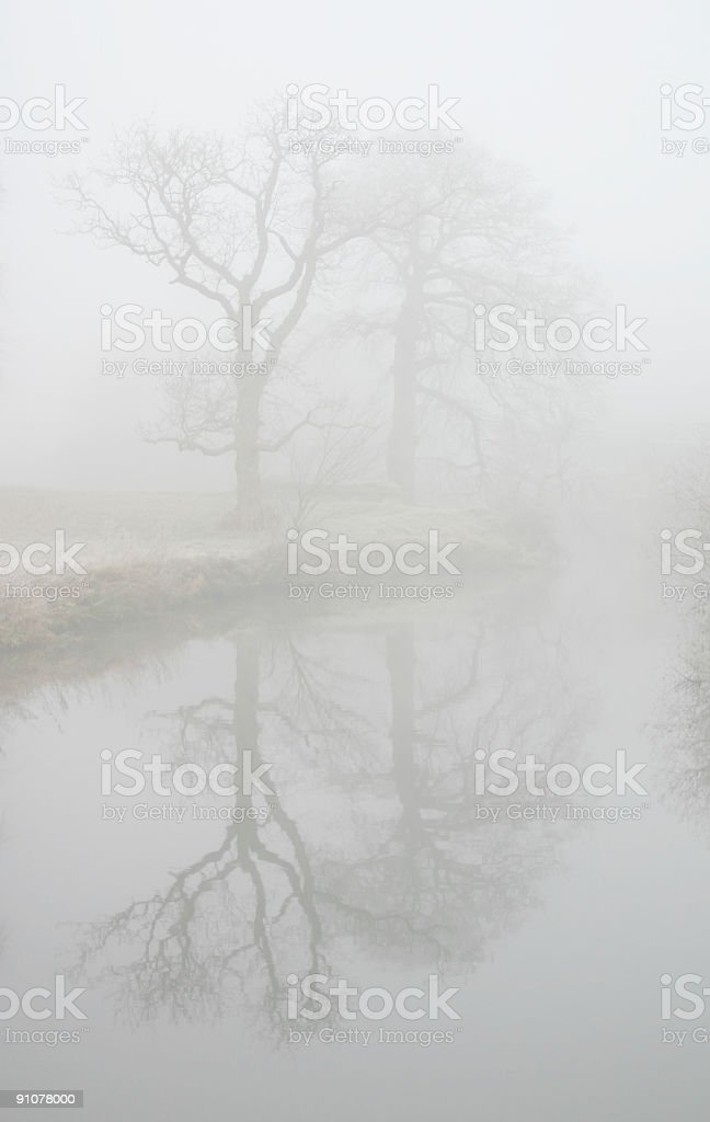 Reflected Trees in Winter Fog royalty-free stock photo