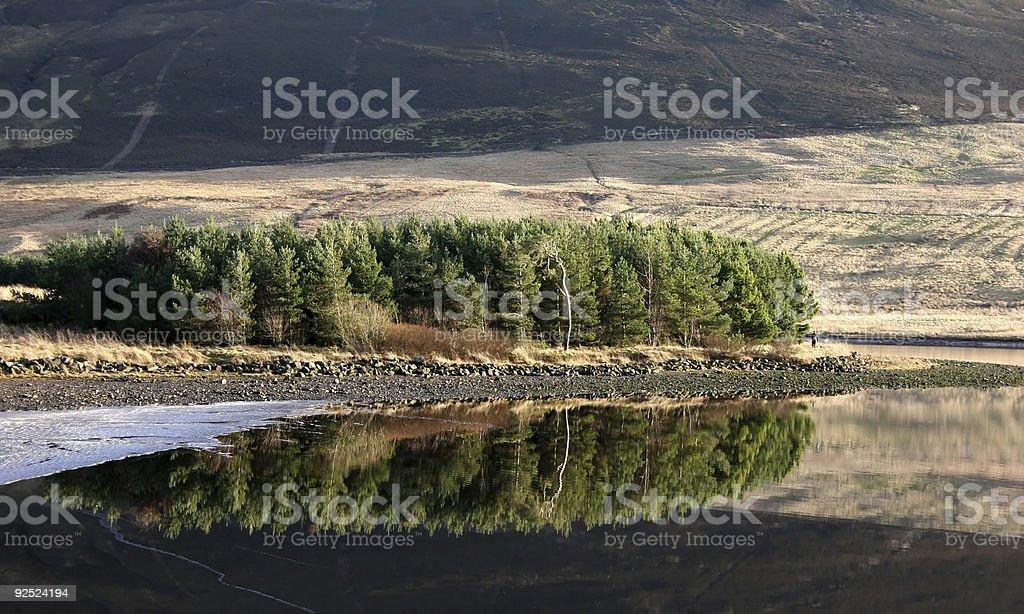 Reflected Trees stock photo