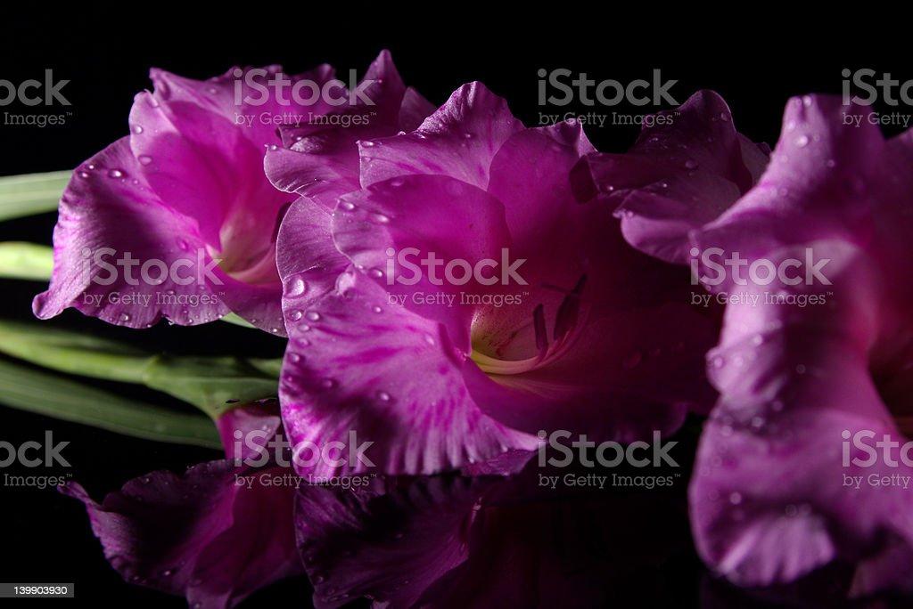 Reflecting Flowers stock photo