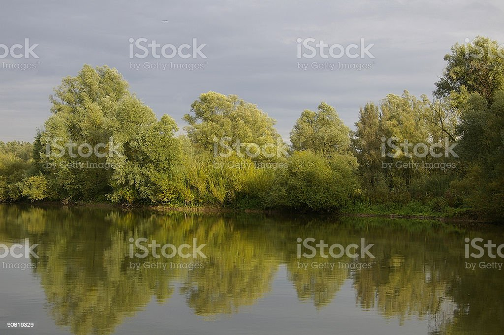 Reflecting Willows in the Millingerwaard stock photo