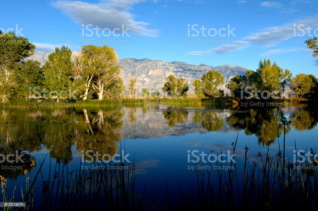 Reflection at Millpond County Park near Bishop, California stock photo