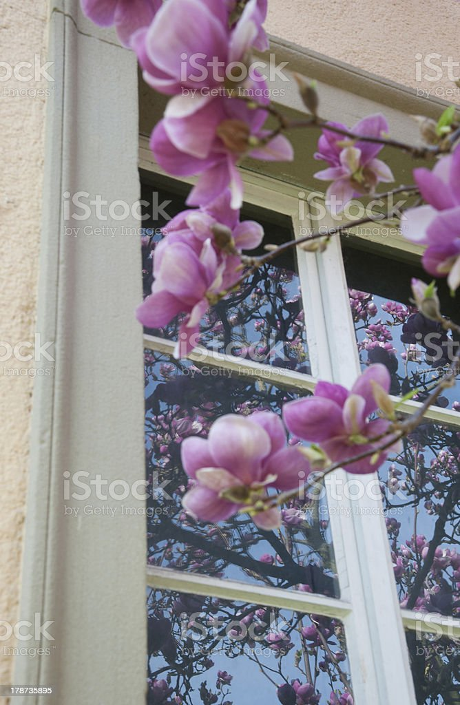 Spiegelung vor blau royalty-free stock photo