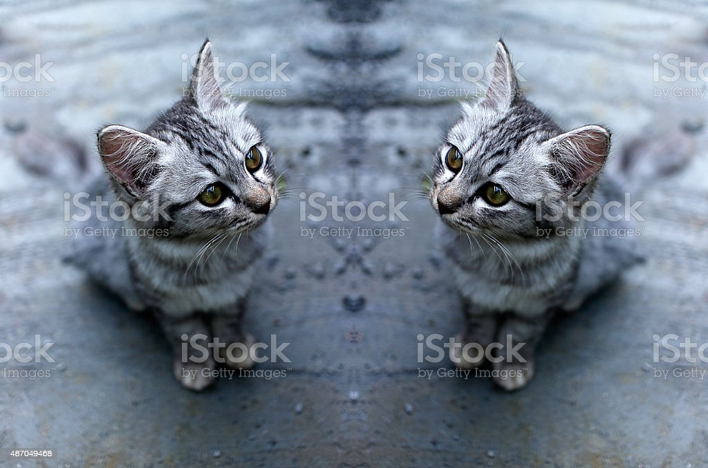 reflection cute kitten royalty-free stock photo