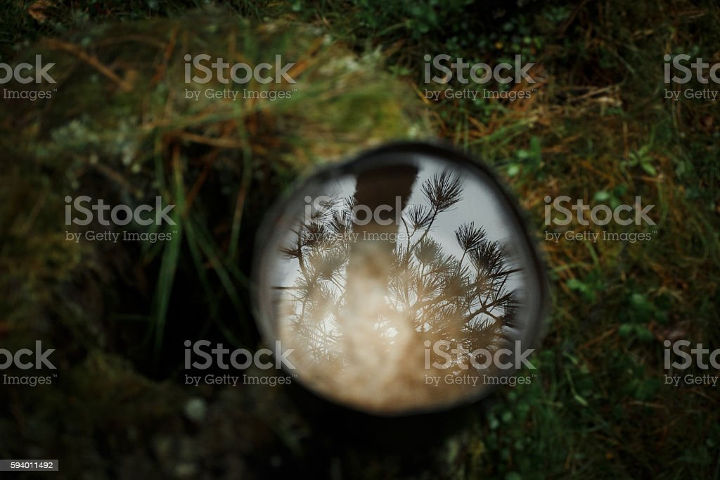 Reflection in the water of pine forest royalty-free stock photo