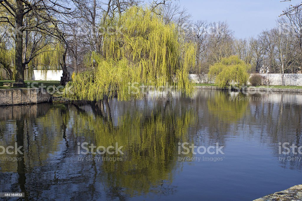 Reflection in the water stock photo