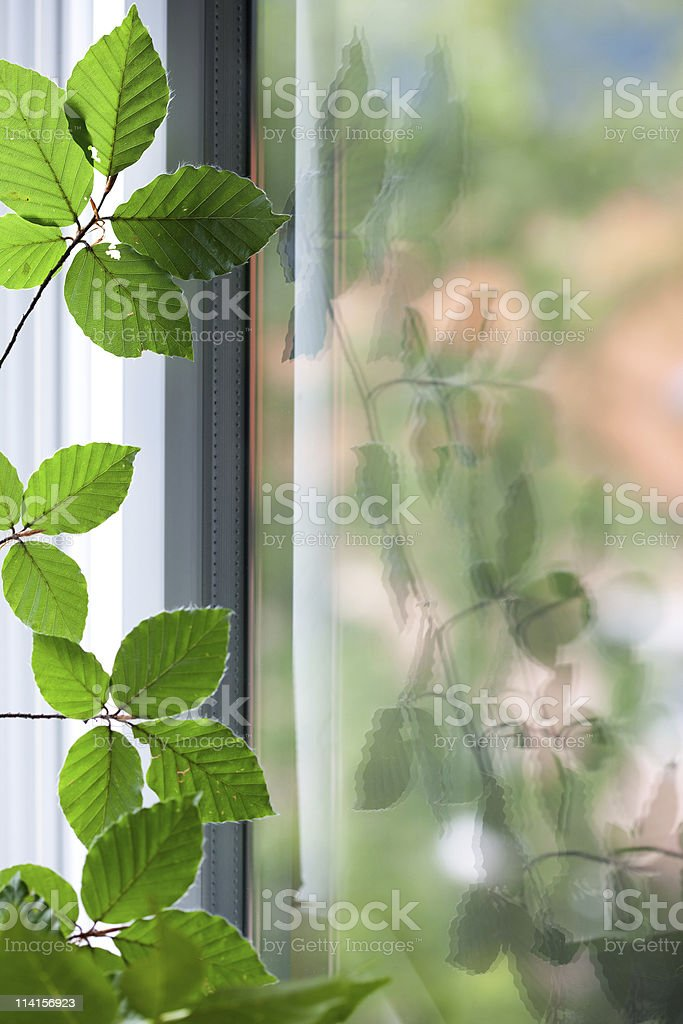Reflection In The Window royalty-free stock photo