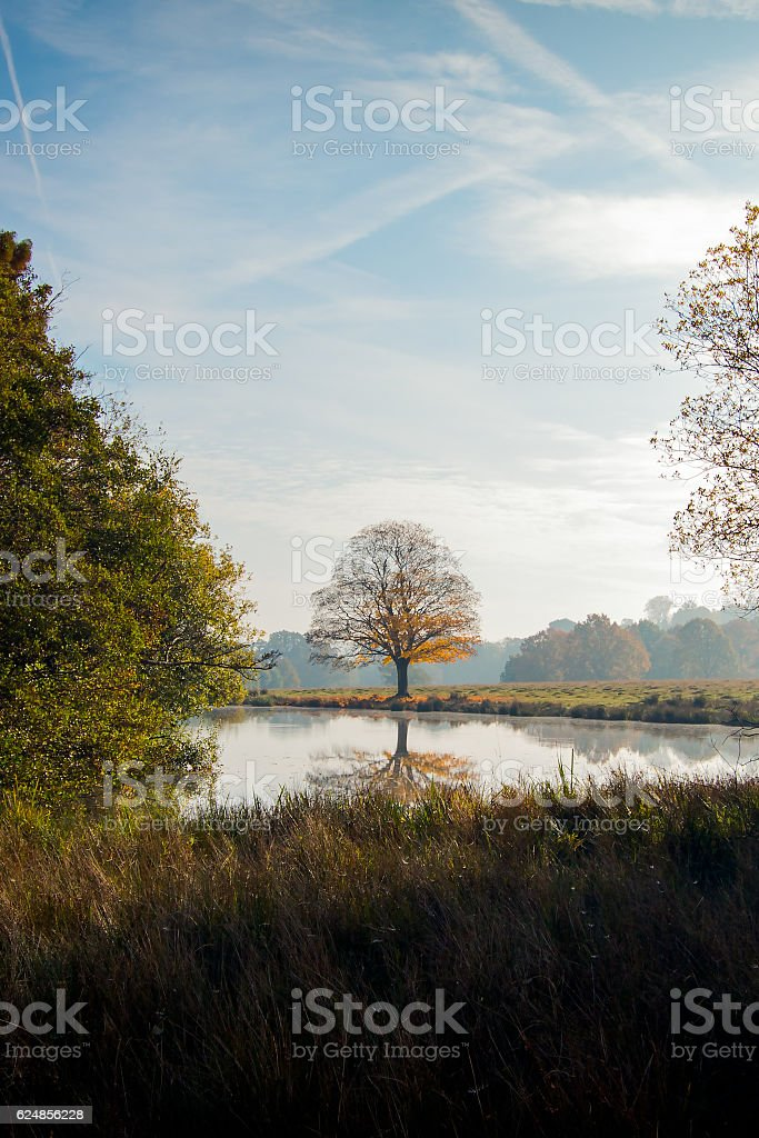 Reflection of a solitary tree stock photo