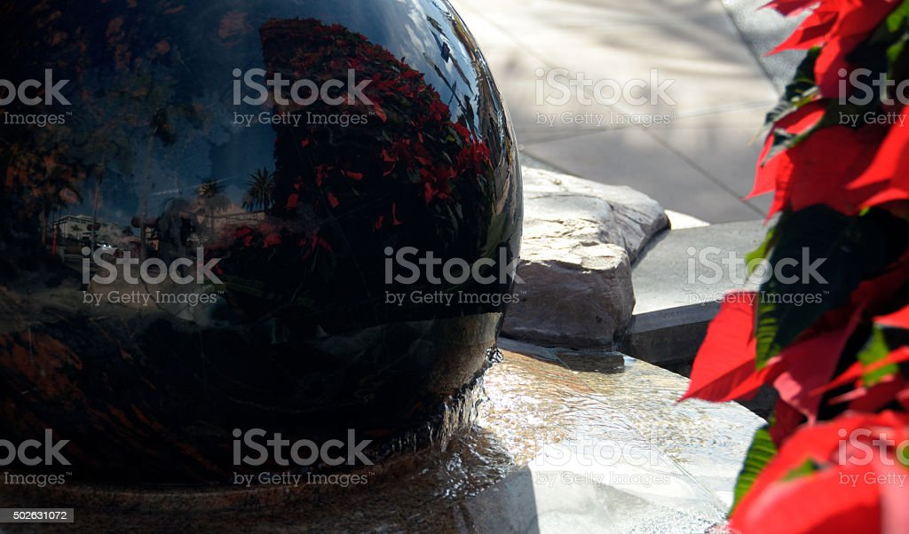 Reflection of a street and Christmas tree made of Poinsettias stock photo