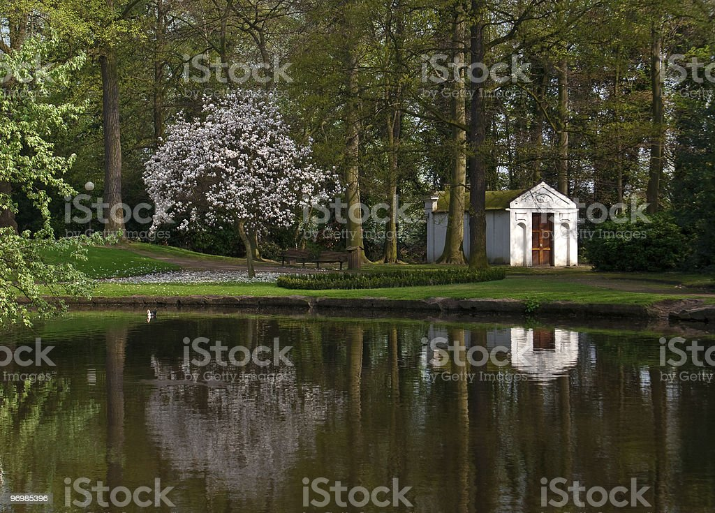 Reflection of blooming magnolia tree in the belgian park royalty-free stock photo