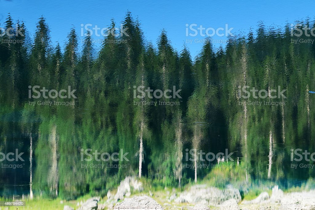 Reflection of fir trees stock photo