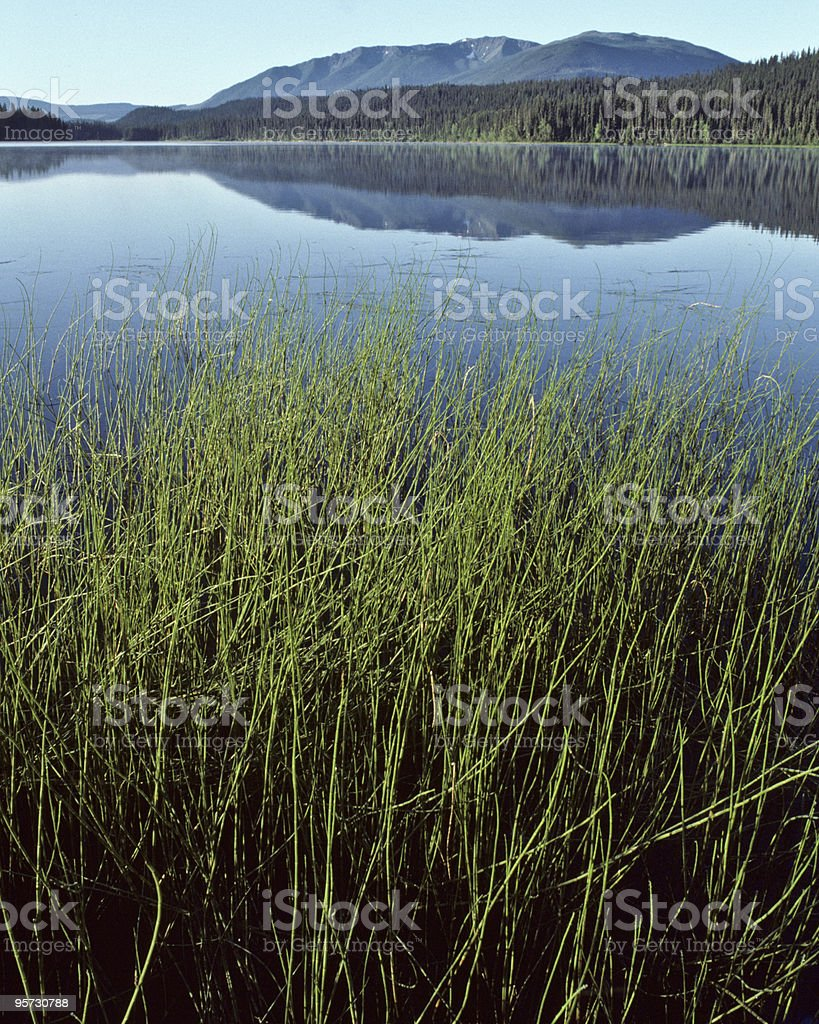 Reflection of Mountains in Swan Lake at Sunrise stock photo