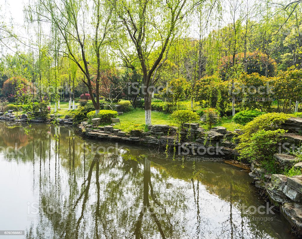 Reflection of pine tree in a lake, Pang Oung , Thailand stock photo