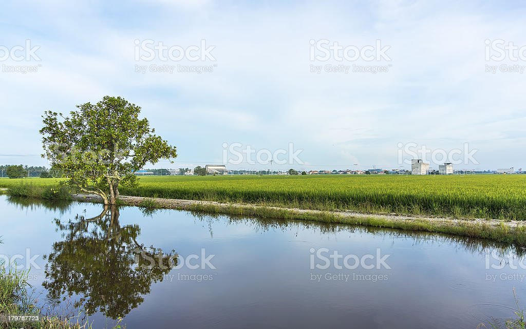 Reflection of tree royalty-free stock photo