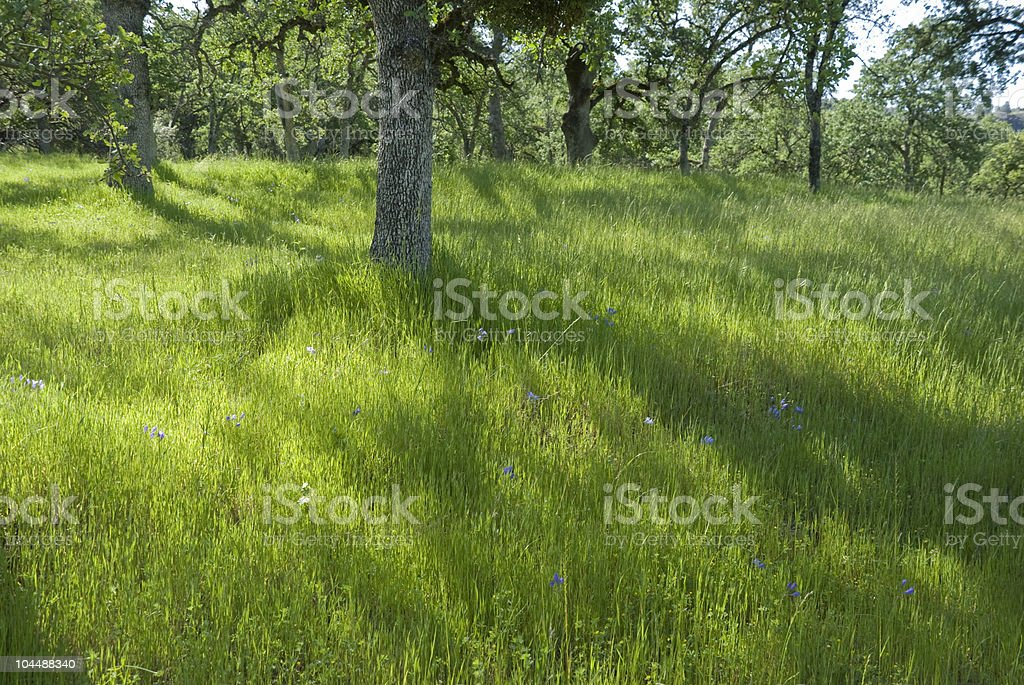 Reflection of Trees in a Meadow royalty-free stock photo