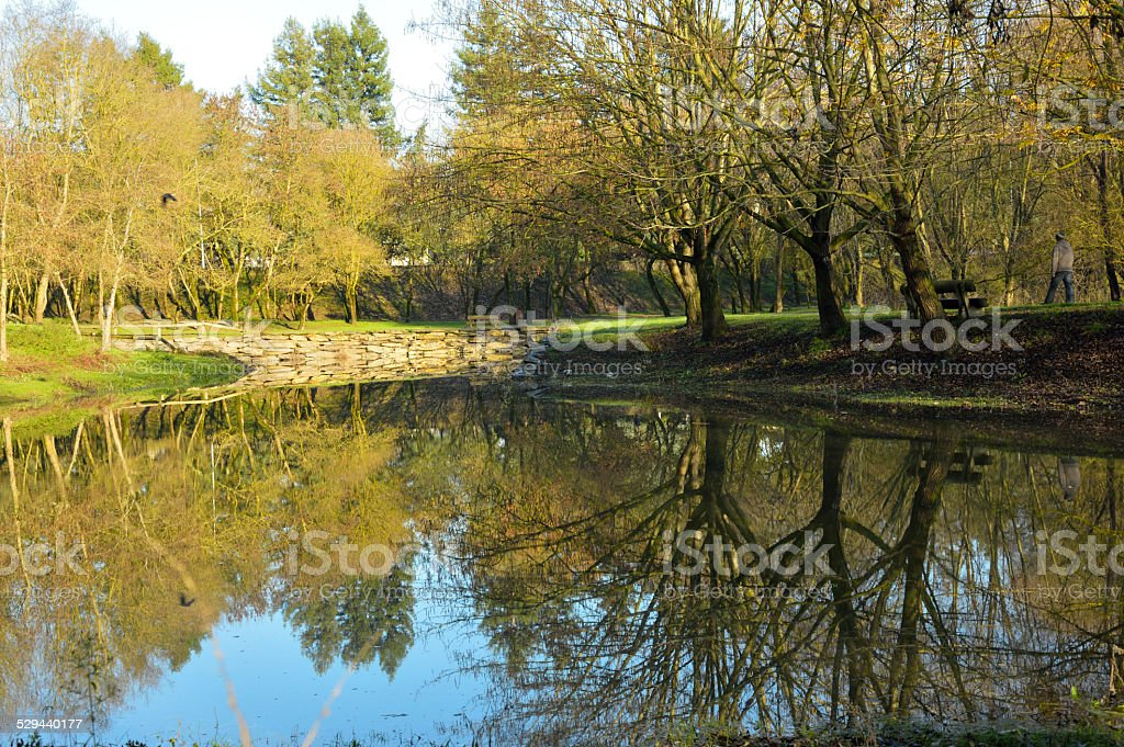Reflection of trees in a pond stock photo