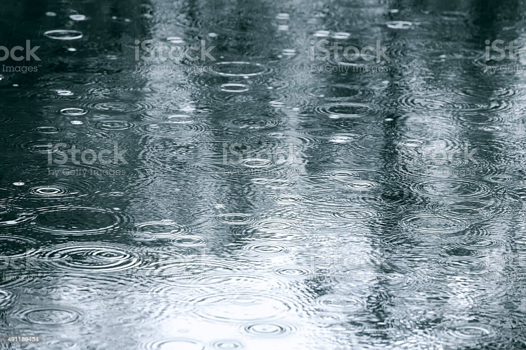 reflection of trees in a puddle stock photo