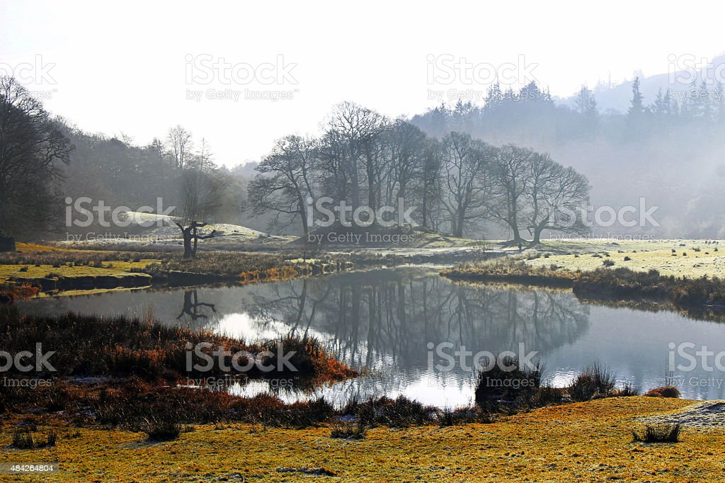 Reflection of trees in the Lake District, Cumbria, UK stock photo