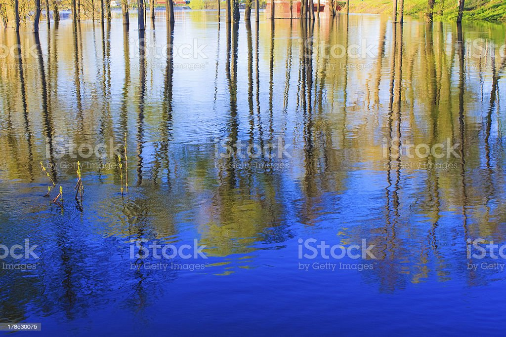 Reflection of trees in the river at dawn royalty-free stock photo