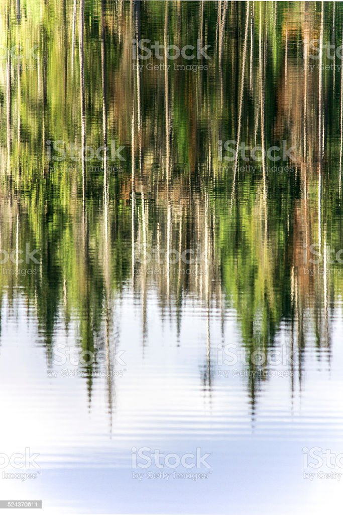 Reflection of trees in the water stock photo