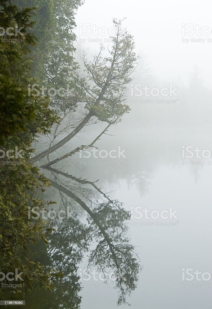 Reflection of Trees on a Foggy Lake stock photo