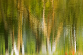 Reflection of trees on water, green environmental background, vertical image