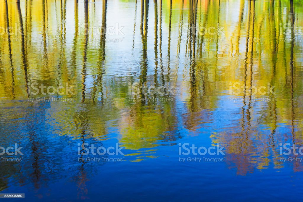 Reflection of Trees woods  river Water During A Spring Flood. stock photo