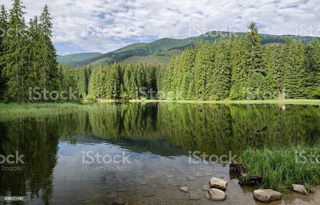 Reflection on lake in forest stock photo