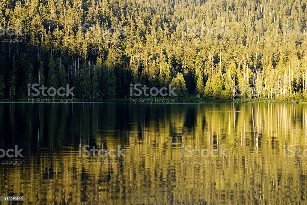 Reflection royalty-free stock photo