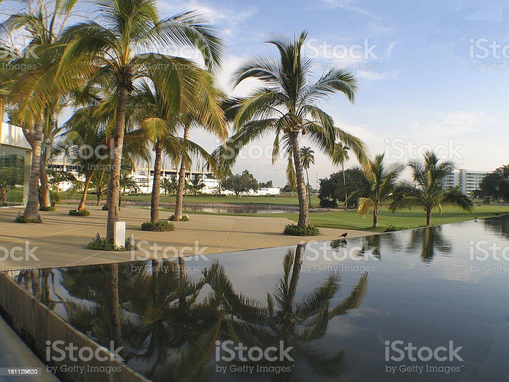 Reflection Pool With Palm Trees royalty-free stock photo