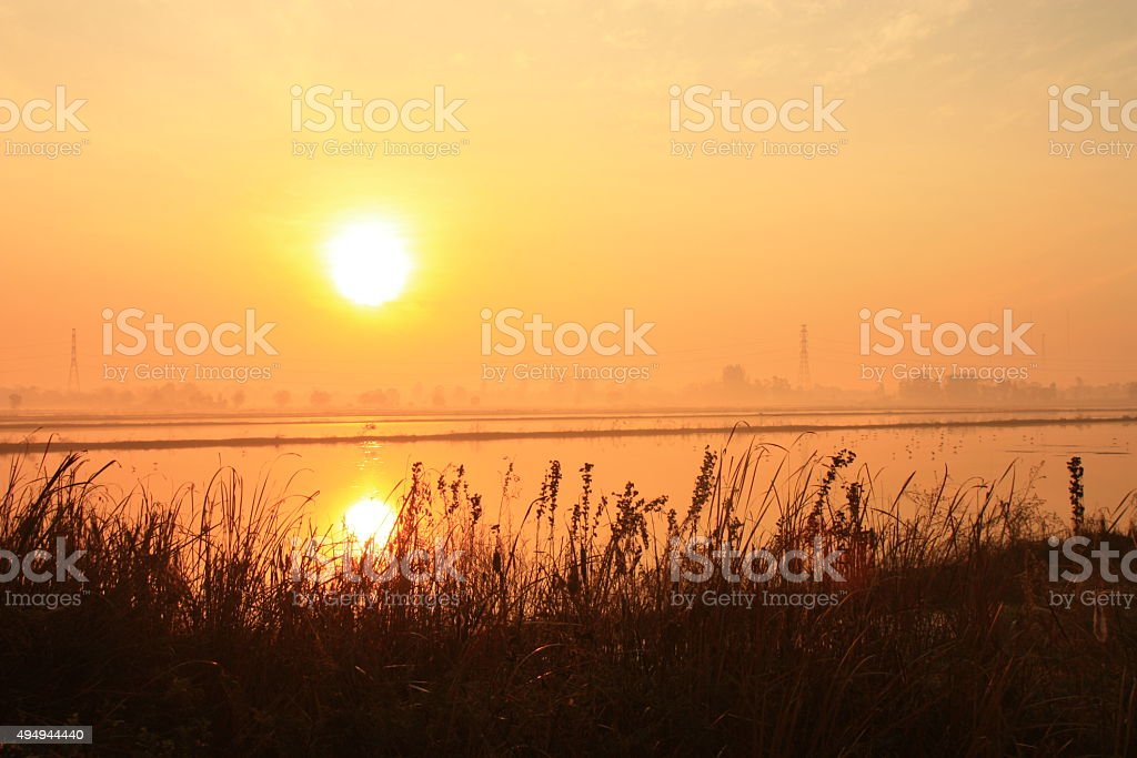 reflection sunset on rice field stock photo