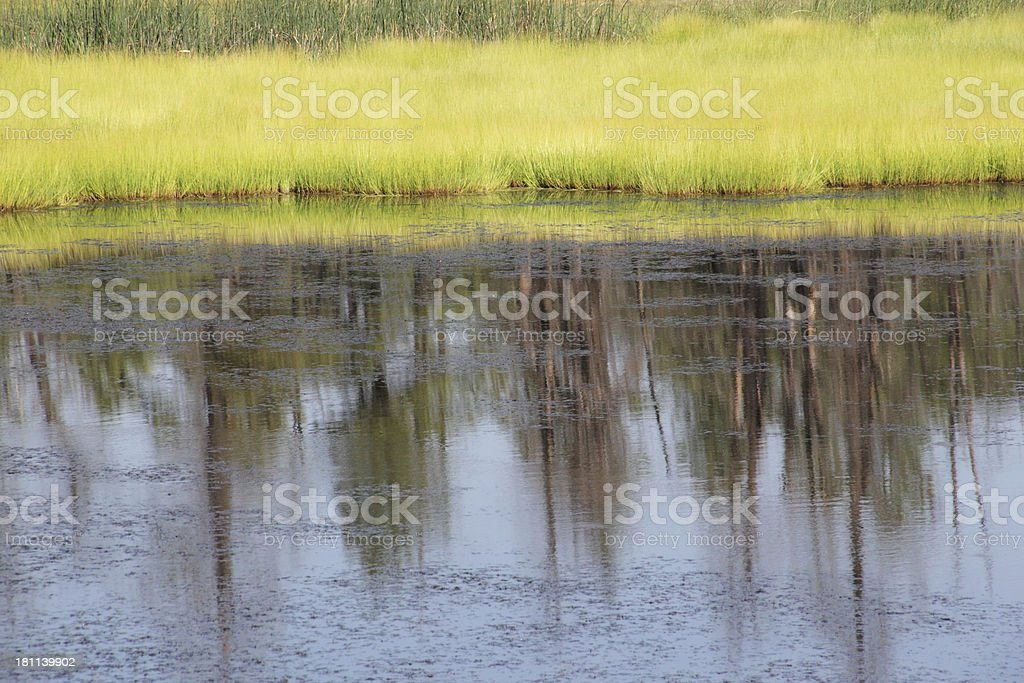 Reflection Trees Grass Pond Spring stock photo