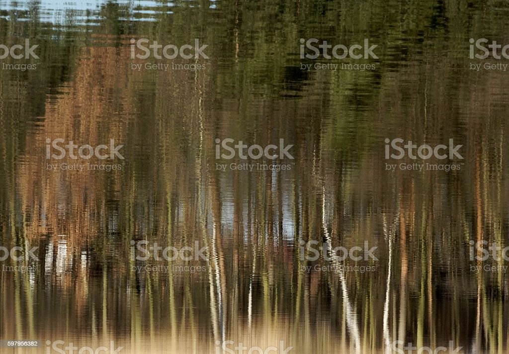 reflection-forest stock photo