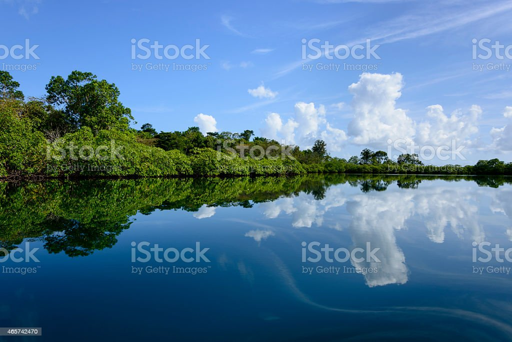 XXXL: Reflections along a mangrove stock photo