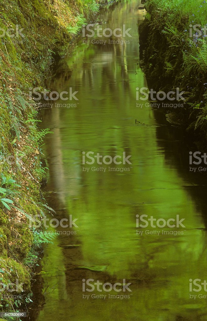 Reflections in a Leat System in the Luxulyan Valley stock photo