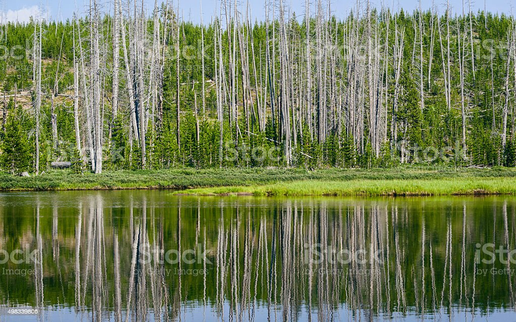 Reflections in the Yellowstone River, Wyoming, USA. stock photo