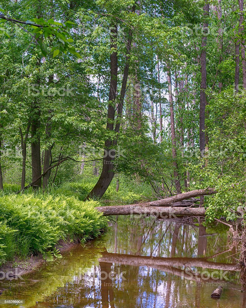 Reflections, Little Cedar River, MI stock photo